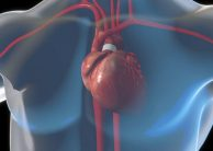 Ejection Fraction (EF): How It Affects People with Mitral Valve Prolapse